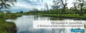 Laguna Wetland