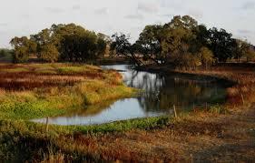 laguna estuary