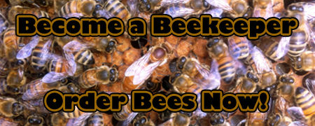 beginning bee workshop