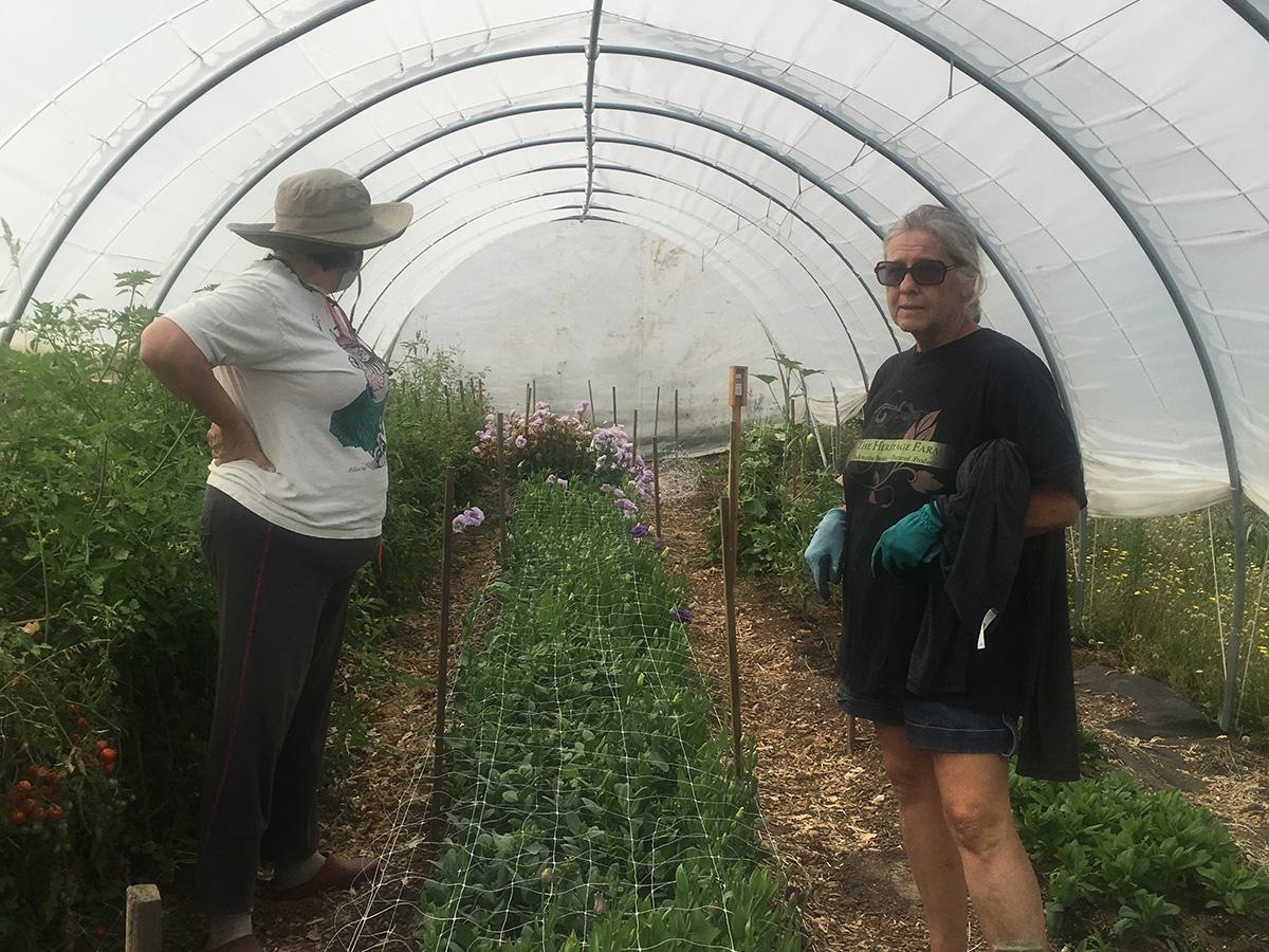 Amy shows Nancy Cadigan around her greenhouse.