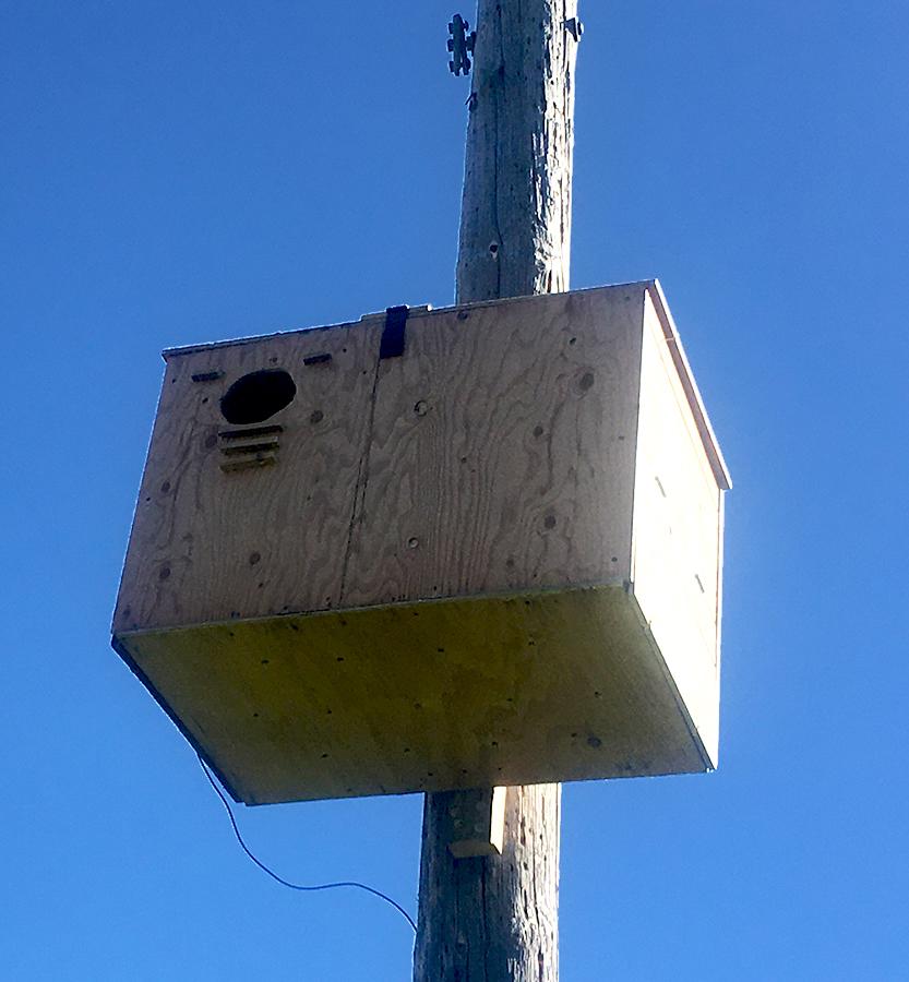 Owl box.